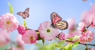 صوره صور ورد خلفيات , اجمل اشكال وانواع الورود
