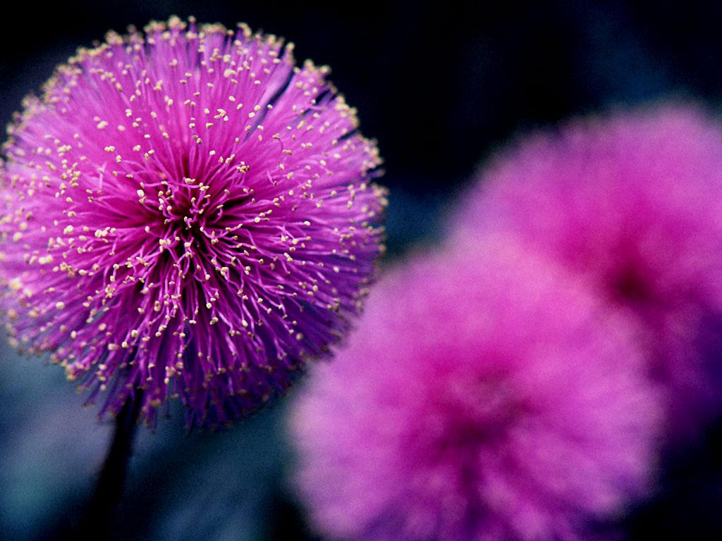 بالصور صور ورد خلفيات , اجمل اشكال وانواع الورود 3582 2