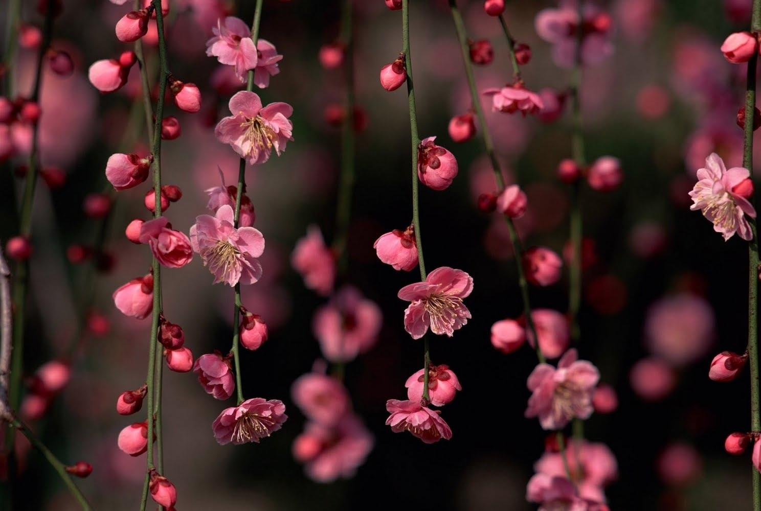 بالصور صور ورد خلفيات , اجمل اشكال وانواع الورود 3582 4