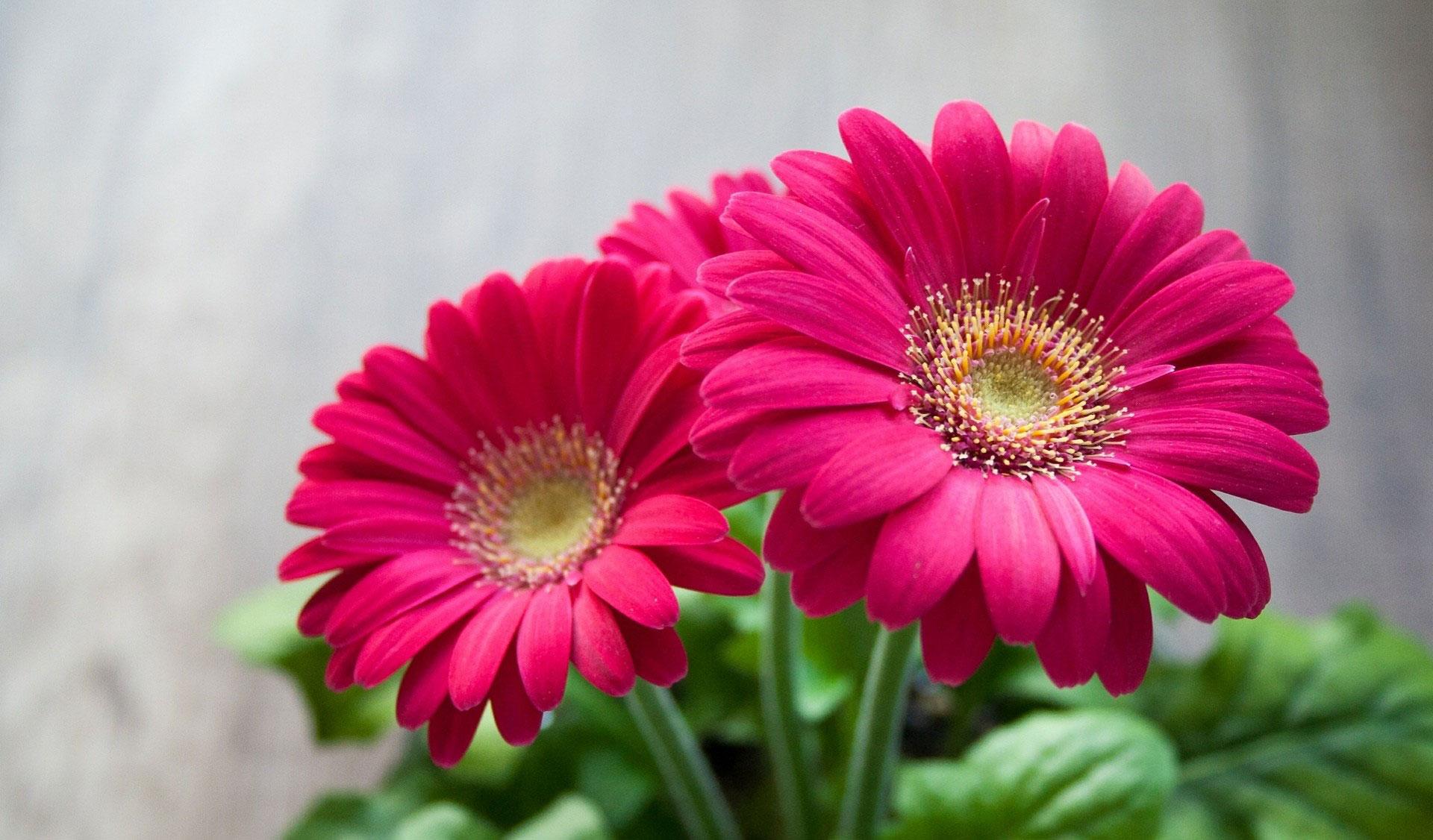 بالصور صور ورد خلفيات , اجمل اشكال وانواع الورود 3582 5