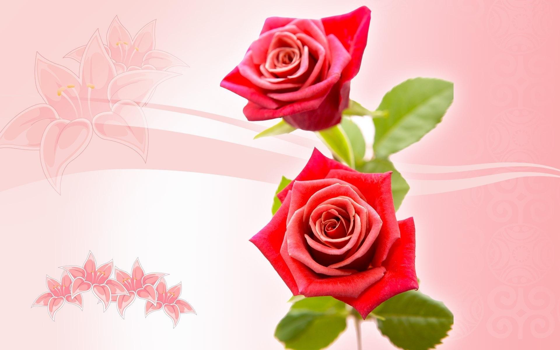 بالصور صور ورد خلفيات , اجمل اشكال وانواع الورود 3582 6