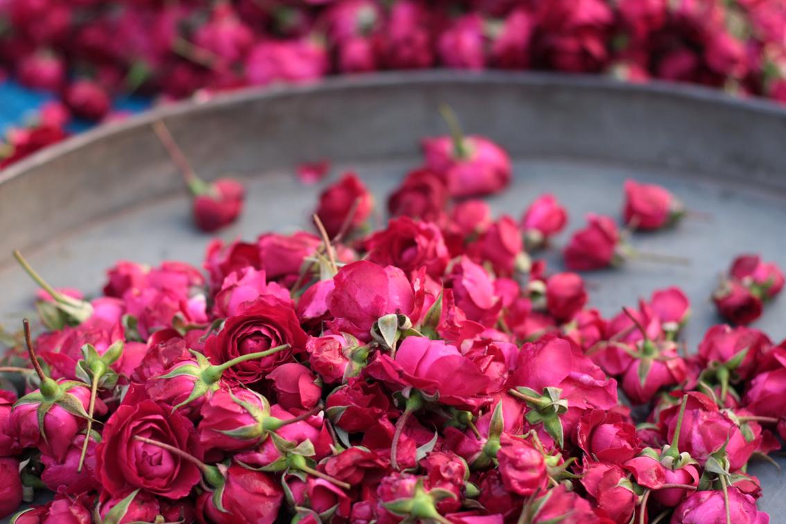 بالصور صور ورد خلفيات , اجمل اشكال وانواع الورود 3582 7