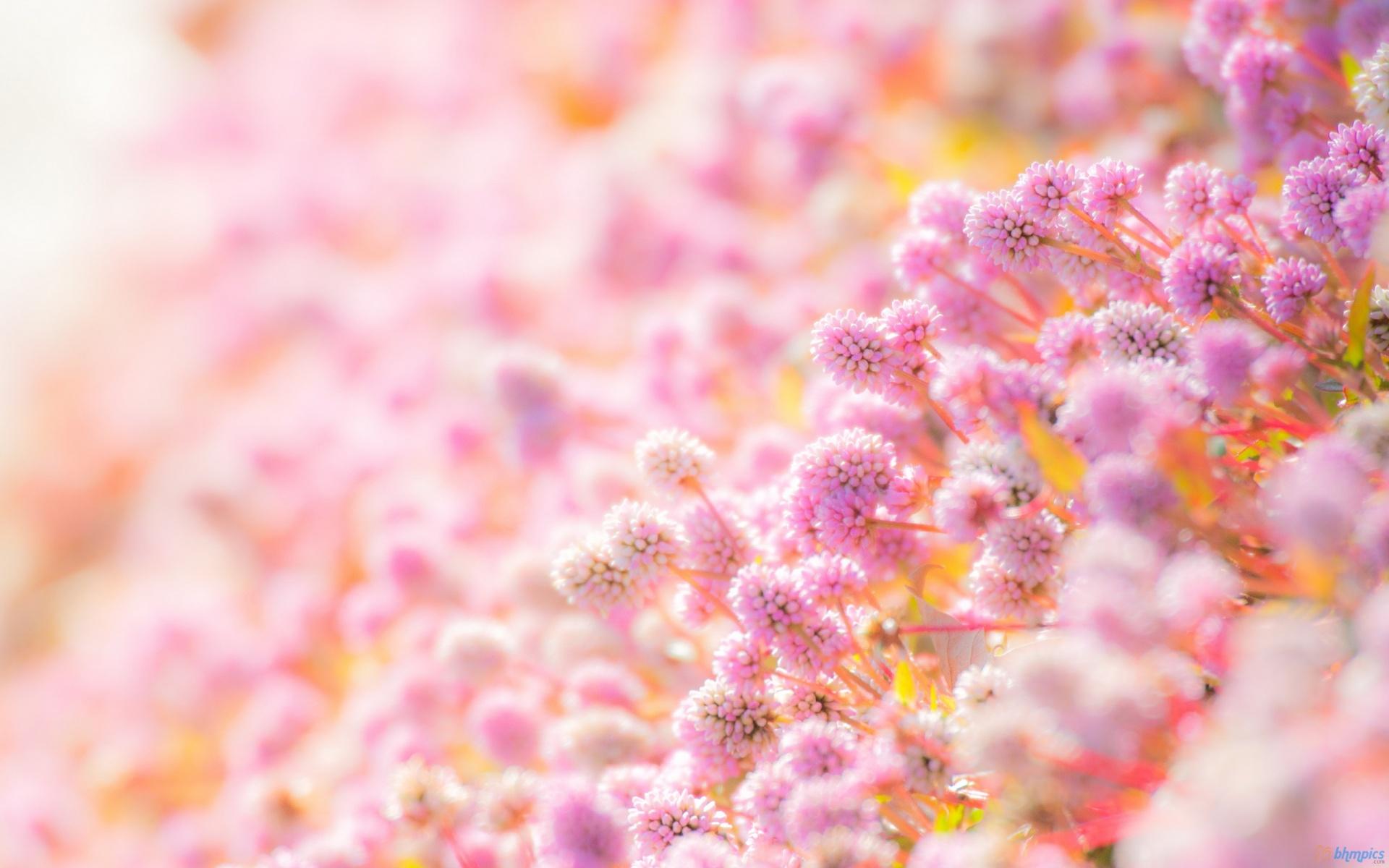 بالصور صور ورد خلفيات , اجمل اشكال وانواع الورود 3582 8