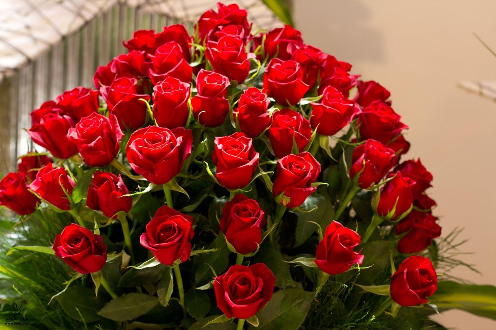 بالصور صور ورد خلفيات , اجمل اشكال وانواع الورود 3582 9