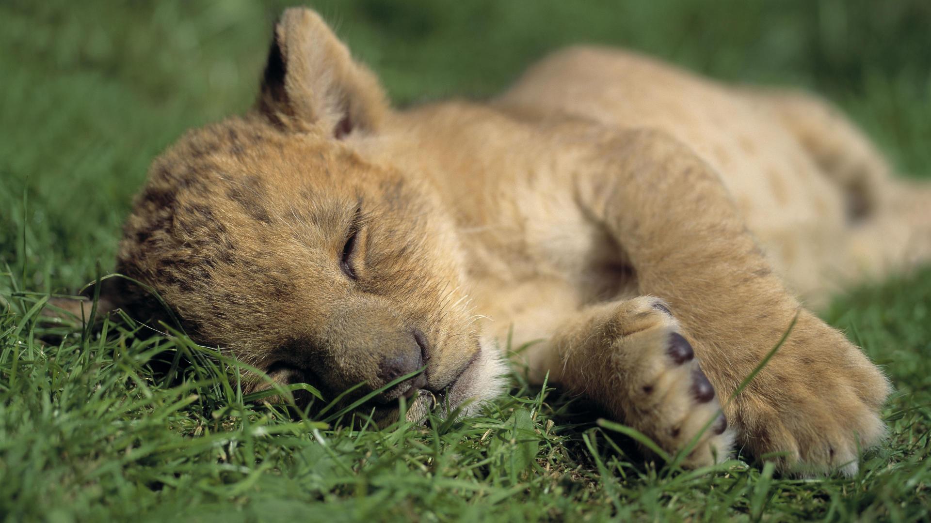 صوره صور حيوانات , مجموعة صور تضم اجمل الحيوانات