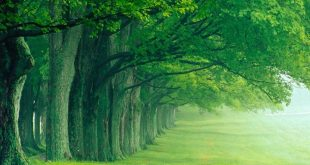 صوره اجمل الصور الطبيعية في العالم , الصور الطبيعية مصدر سعادة