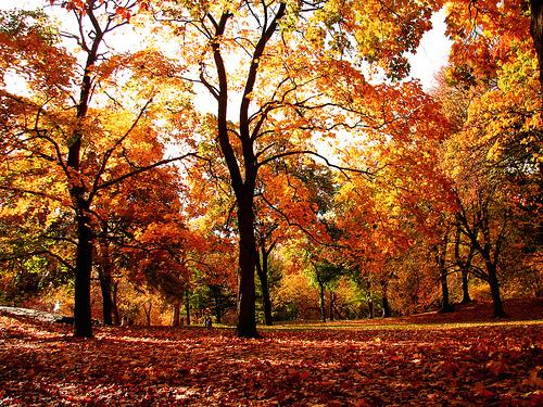بالصور صور مناظر طبيعيه , اجمل واروع المناظر الطبيعيه 5376 7