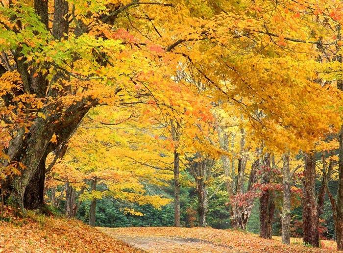 بالصور صور مناظر طبيعيه , اجمل واروع المناظر الطبيعيه 5376 8