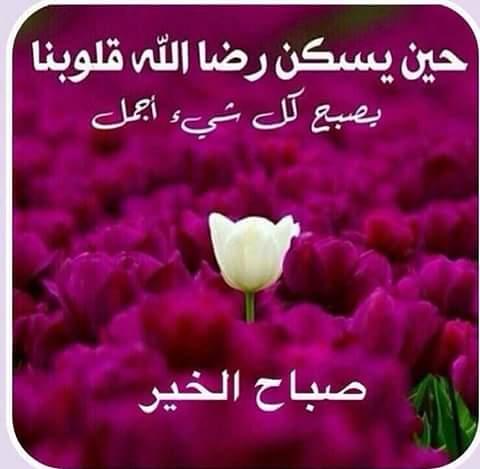 بالصور صور صباح خير , احلى صور صباح الخير 5386 1