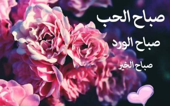 بالصور ورود مكتوب عليها عبارات جميله , صور لاجمل الورود بارق عبارات 5387 4
