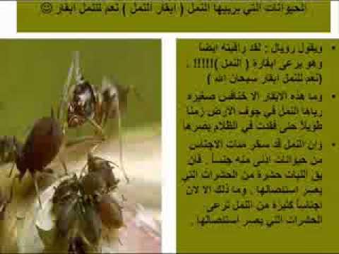 صور معلومات عن النمل , حقائق مدهشة عن النمل