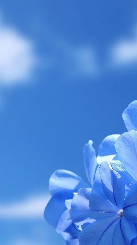 صورة خلفية زرقاء , صور رائعه بالون زرقاء