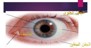 مكونات العين , اجزاء العين ووظائفها