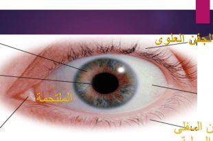 صوره مكونات العين , اجزاء العين ووظائفها