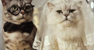 صور صور حيوانات مضحكة , اروع الصور للحيوانات الجميله و المضحكه