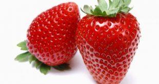 بالصور فوائد الفراولة , تعرفي على اهمية فاكهة الفراولة للصحة العامة 5622 3 310x165
