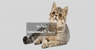 صور كيفية تربية القطط , كيفه الاعتناء بالقطط الصغيره