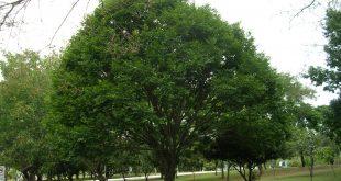 صوره صور اشجار , اجمل صور المناظر الطبيعية والاشجار