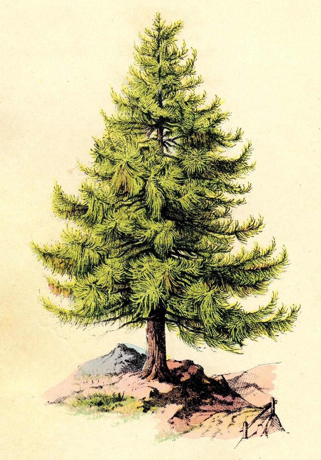 بالصور صور اشجار , اجمل صور المناظر الطبيعية والاشجار 1928 7