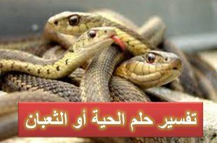 بالصور تفسير الثعبان في المنام , تعبير رؤيا الثعابين في الحلم 2871 3 310x205
