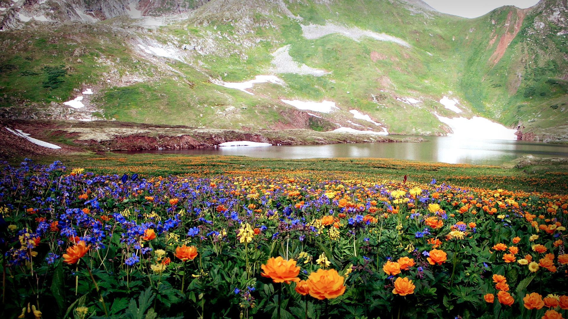 صور صور خلفيات جميله , خلفيات مناظر طبيعيه وازهار