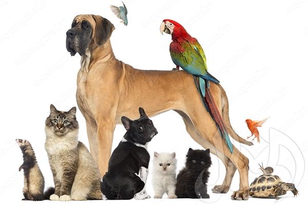 بالصور صور حيوانات اليفه , تربيه الحيوانات الاليفه فالمنزل