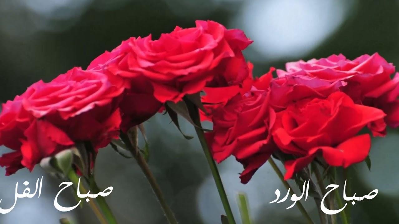 بالصور صباح الفل , اجمل صور الصباح الجميل 3144 8