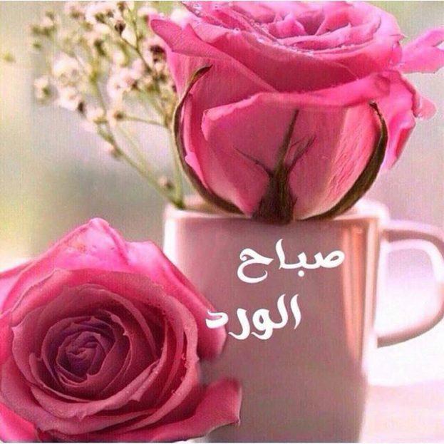 بالصور صباح الورد حبيبي , رقه الصباح بين الاحبه 6124 3