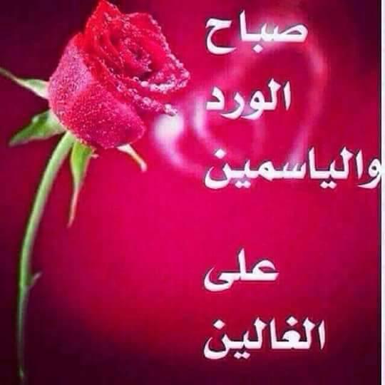 بالصور صباح الورد حبيبي , رقه الصباح بين الاحبه 6124 6