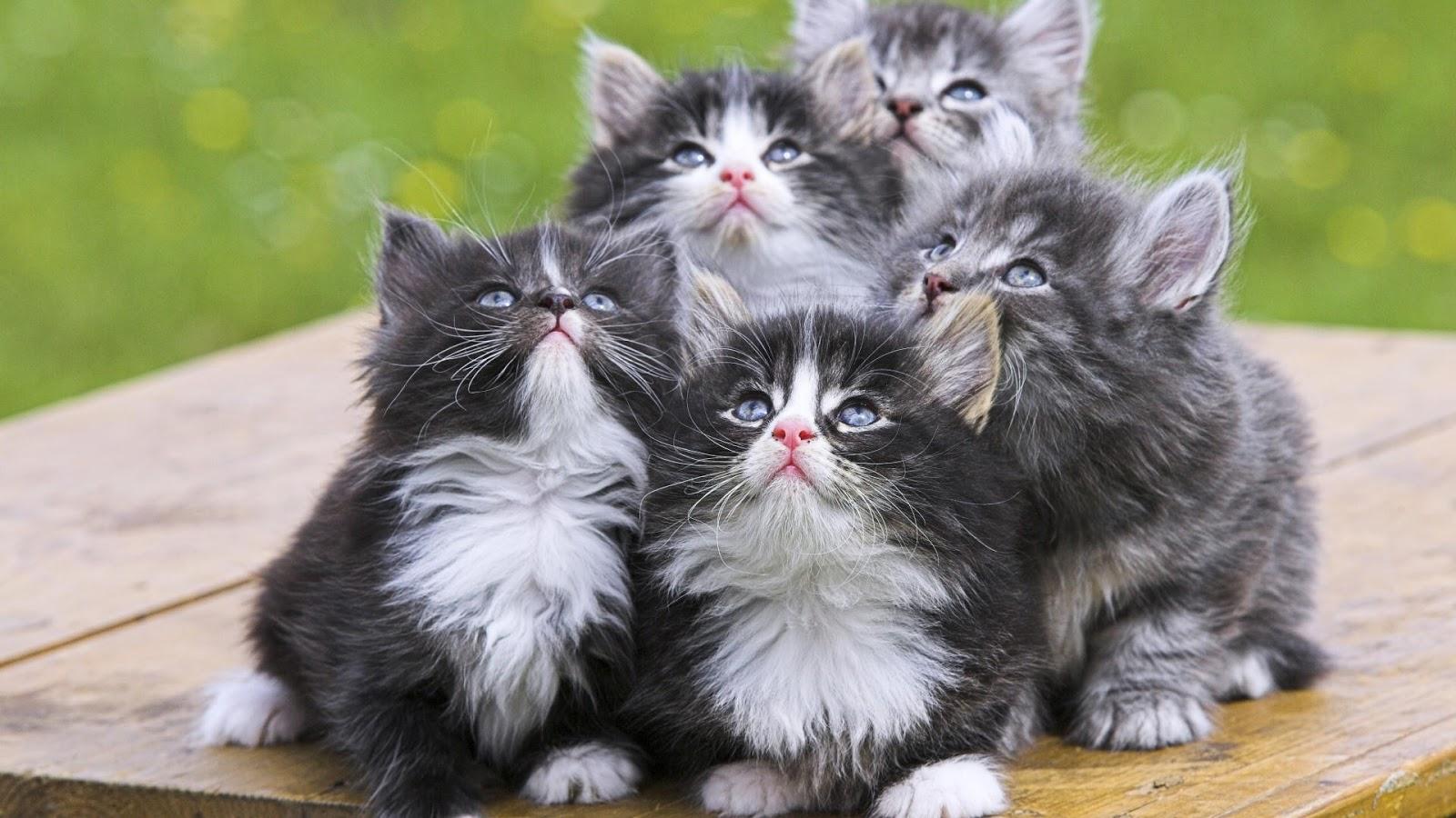 بالصور صور قطط جميلة , القطط الذ حيوان اليف 6135 2