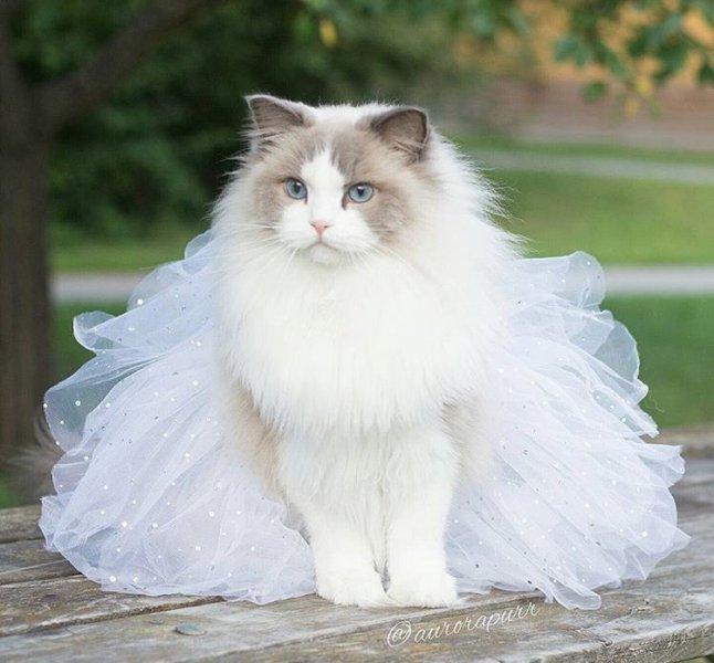 بالصور صور قطط جميلة , القطط الذ حيوان اليف 6135 3