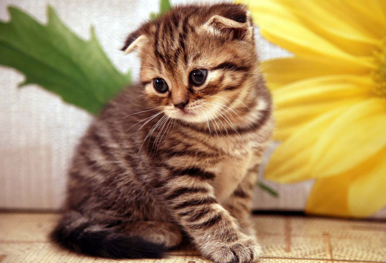 بالصور صور قطط جميلة , القطط الذ حيوان اليف 6135 4