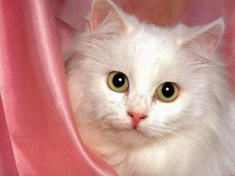 بالصور صور قطط جميلة , القطط الذ حيوان اليف 6135 6