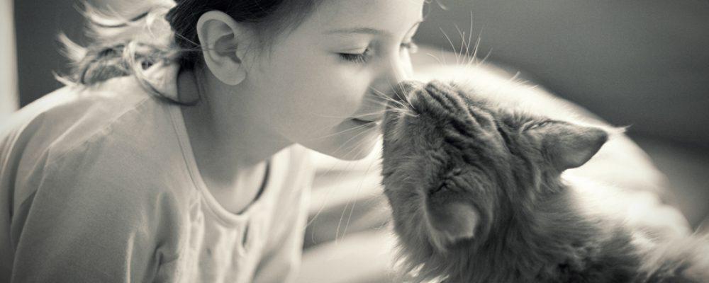 بالصور صور قطط جميلة , القطط الذ حيوان اليف 6135 7
