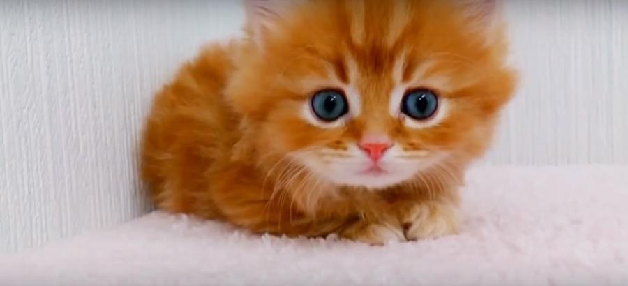 بالصور صور قطط جميلة , القطط الذ حيوان اليف 6135 9
