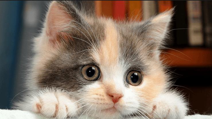 بالصور صور قطط جميلة , القطط الذ حيوان اليف 6135