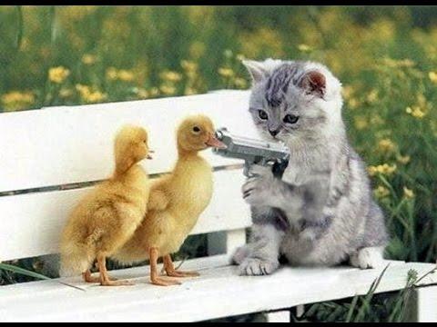 بالصور قطط مضحكة , قطط كيوت رقيقه 1846 1