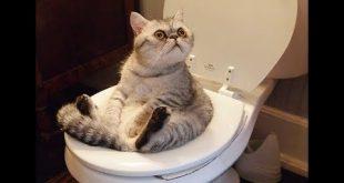 بالصور قطط مضحكة , قطط كيوت رقيقه 1846 3 310x165
