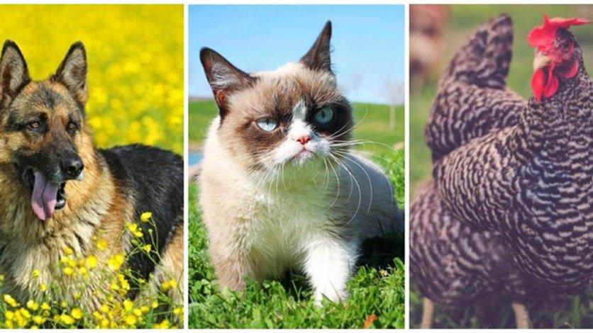 بالصور حيوانات اليفة , حيوانات كيوت جميله 1864 3