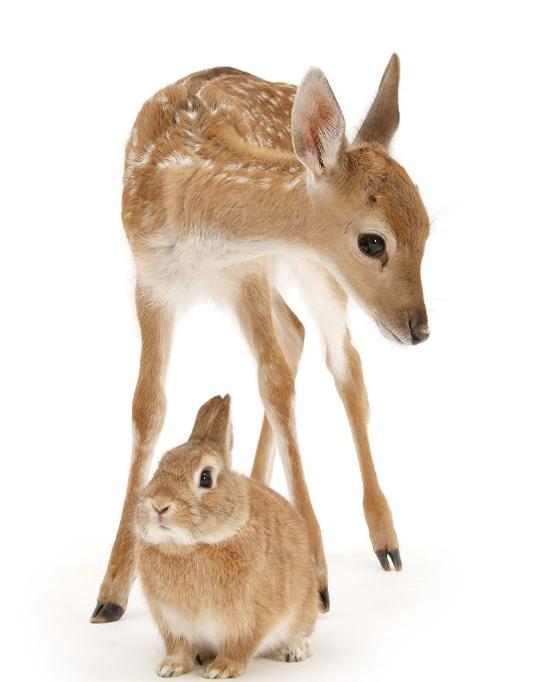 بالصور حيوانات اليفة , حيوانات كيوت جميله 1864