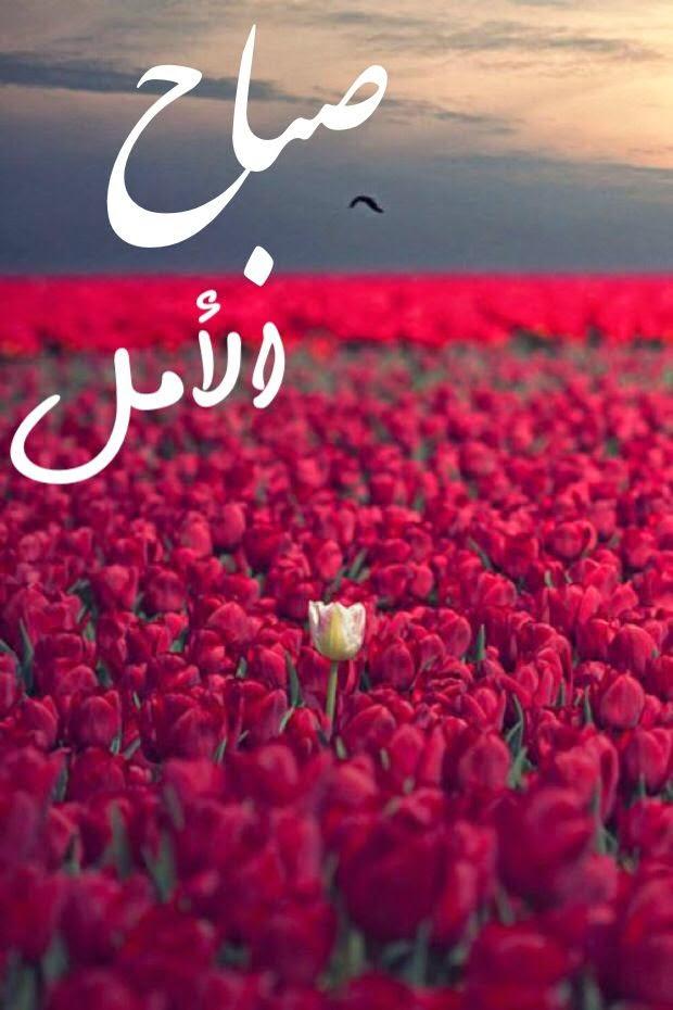 بالصور شعر صباح الخير حبيبي , ابيات شعر لحبيبى فى الصباح 1987 9