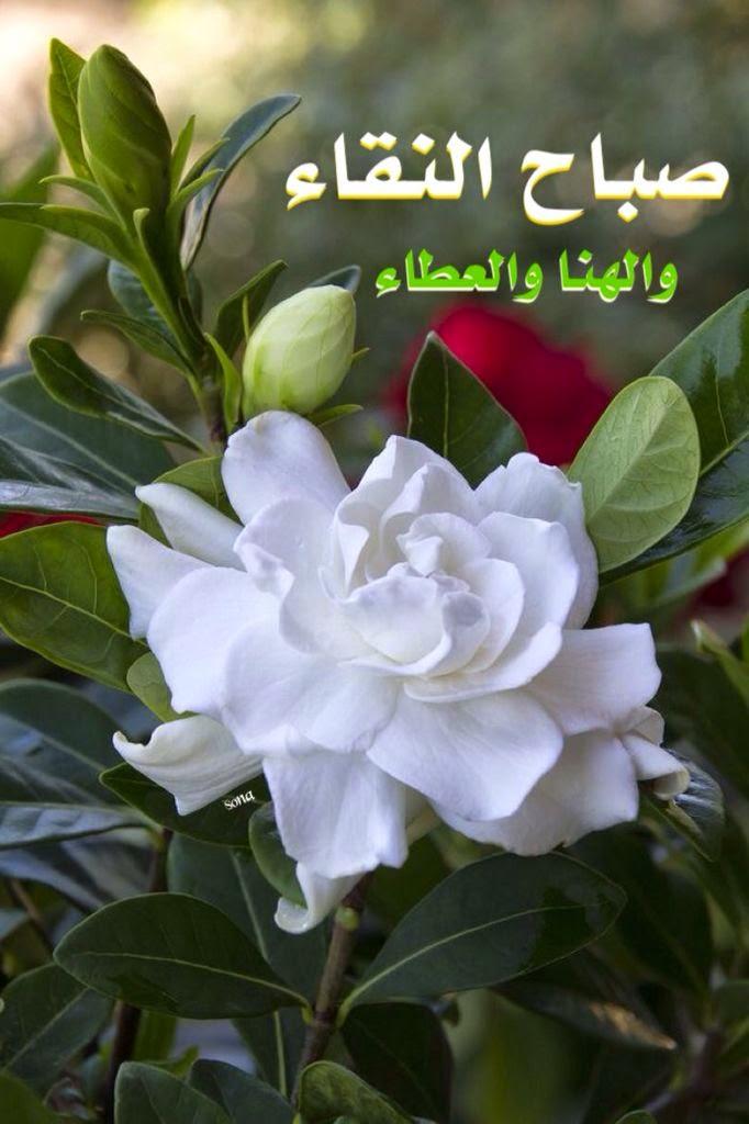 بالصور صباح جميل , الجمال كله فى كلمات تقال فى الصباح 3873 9