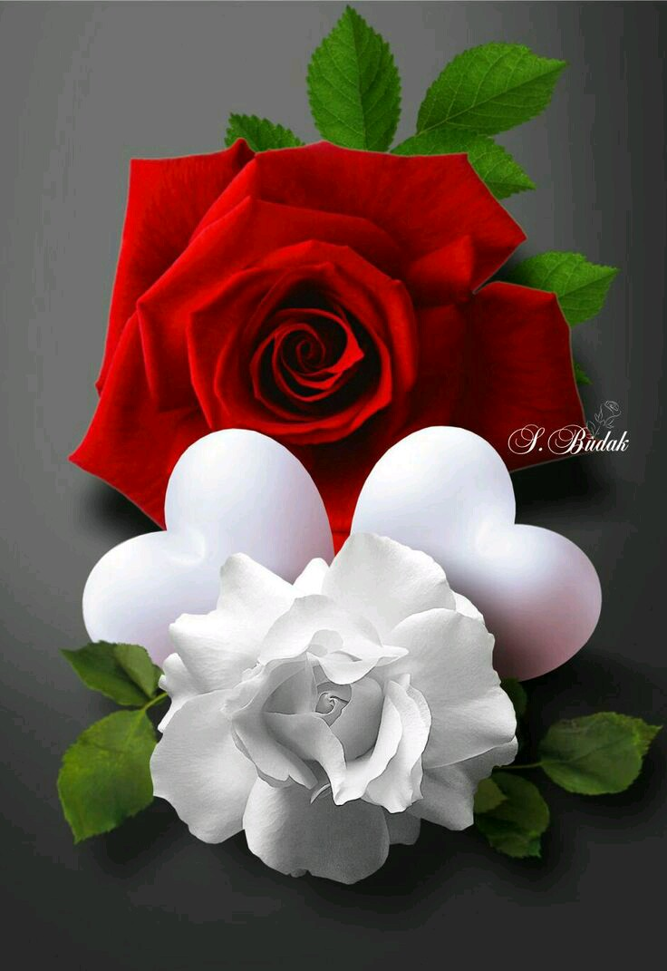 بالصور صور ورد رومانسي , رومنسيات تظهر بالورود 4732 17