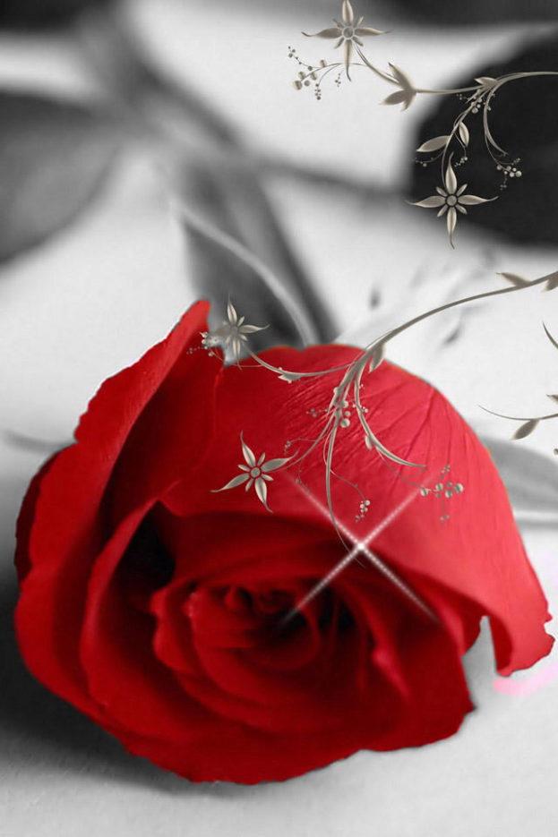 بالصور صور ورد رومانسي , رومنسيات تظهر بالورود 4732 8
