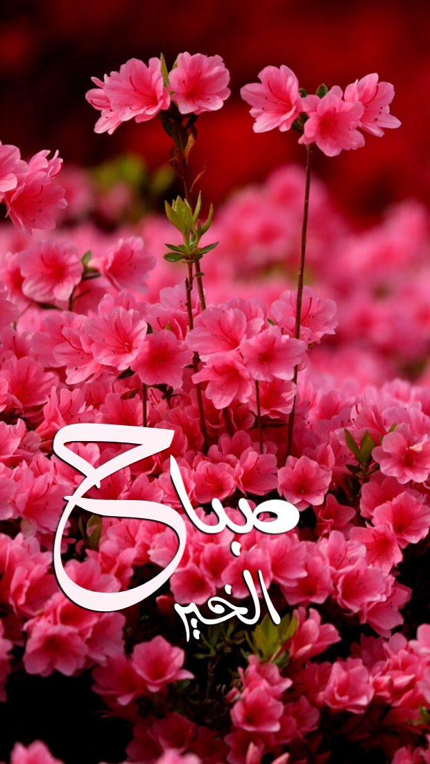 بالصور اجمل صباح الخير , كلمات جميله لصباح الجمال 5171 11