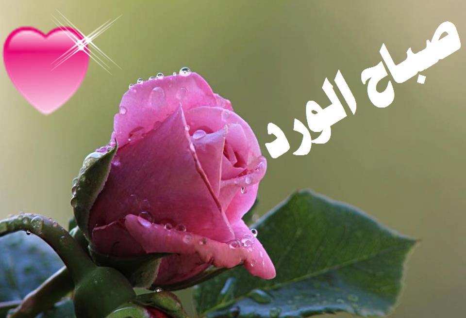 بالصور صور صباحيه جميله , جمال الكلمات فى الصباح 5507 11