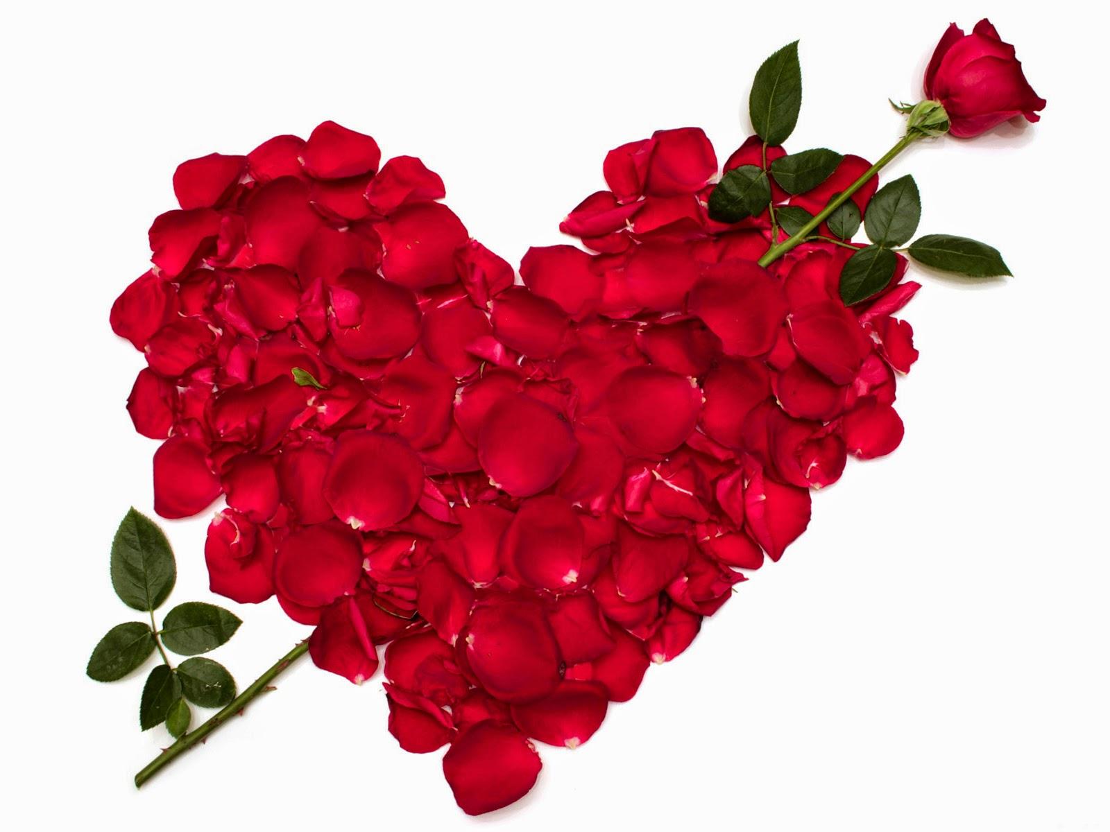 بالصور صور اجمل ورد , الورد وما يقوله فى صوره 6659 11