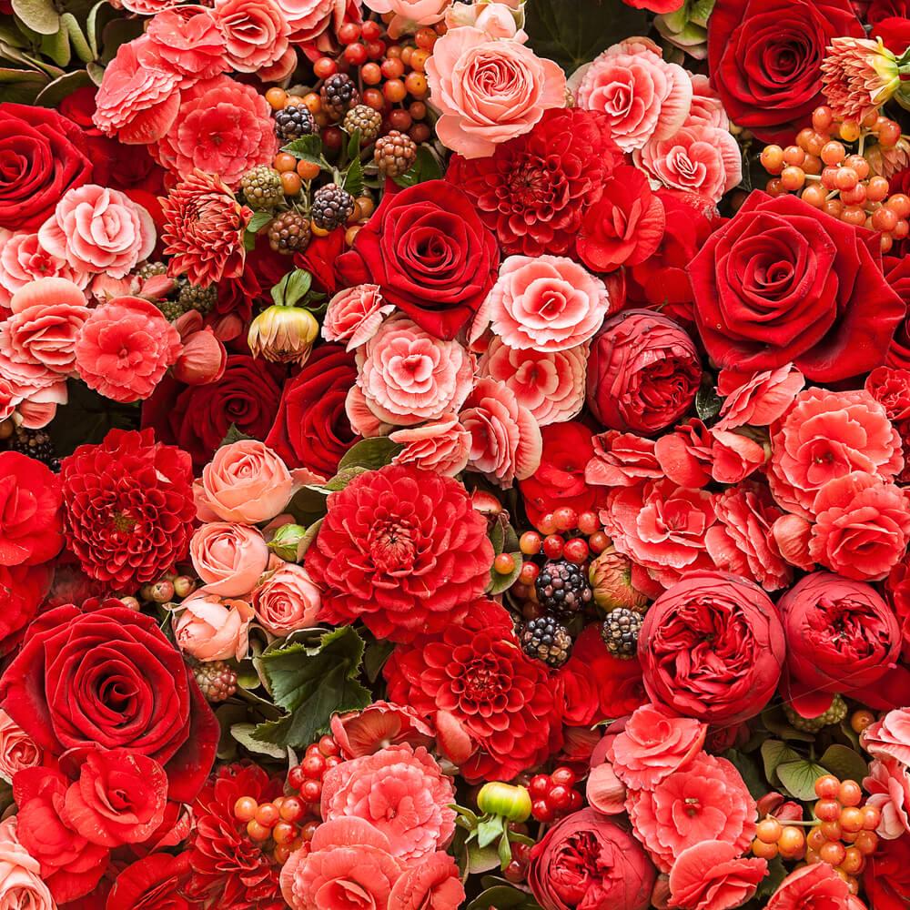 بالصور صور اجمل ورد , الورد وما يقوله فى صوره 6659 2