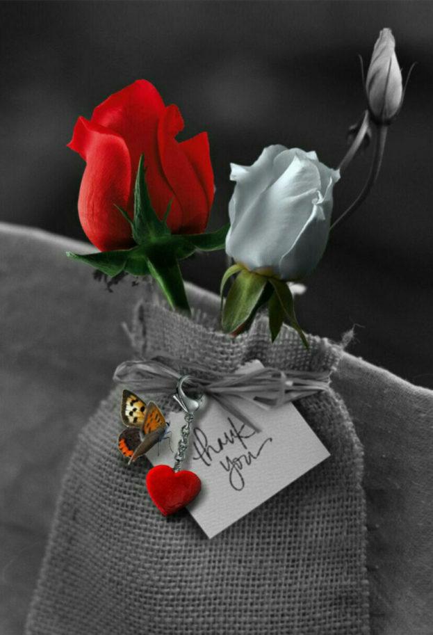 بالصور صور اجمل ورد , الورد وما يقوله فى صوره 6659 9