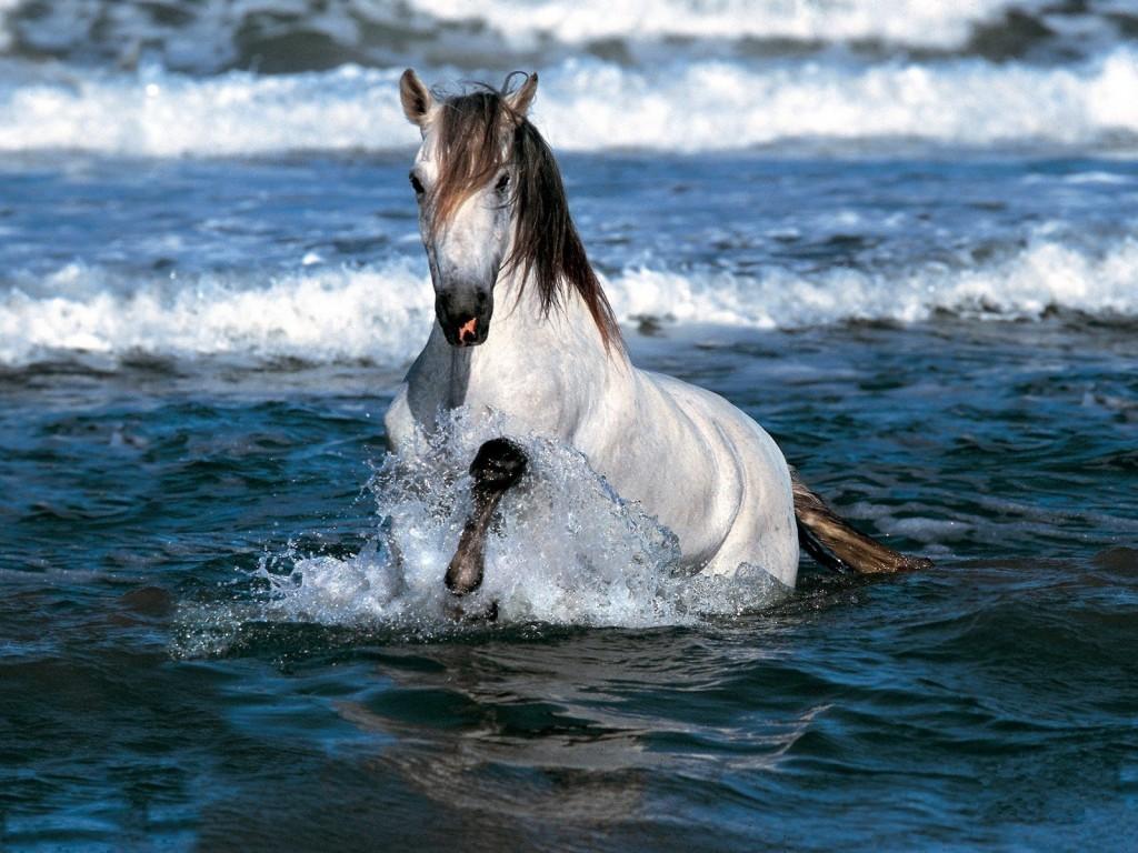 بالصور حصان عربي , الخيل العربيه الاصيله 6696 3